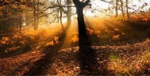 Guerina Pellizzi - Doux automne afin d'Être pleinement
